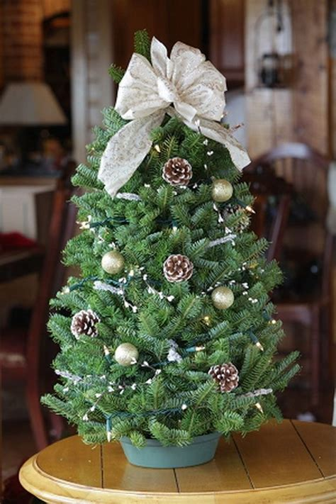 mini tree table decoration 1000 ideas about small trees on