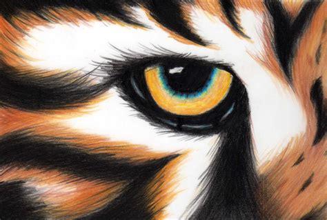 tigers eye tiger