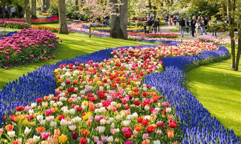 tulip flower garden springe guide tulips in the netherlands tours4fun