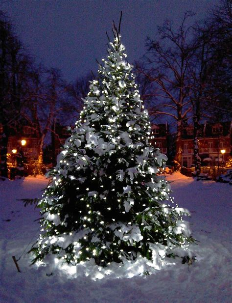 outdoor tree lights outdoor tree lights sale 28 images outdoor lights led