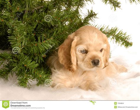 puppy tree puppy tree in snow stock images image 7334854