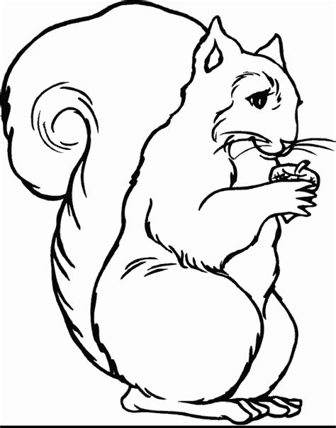 coloring book pictures of animals coloring pages
