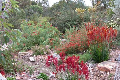 australian garden design ideas australian garden design ideas search my
