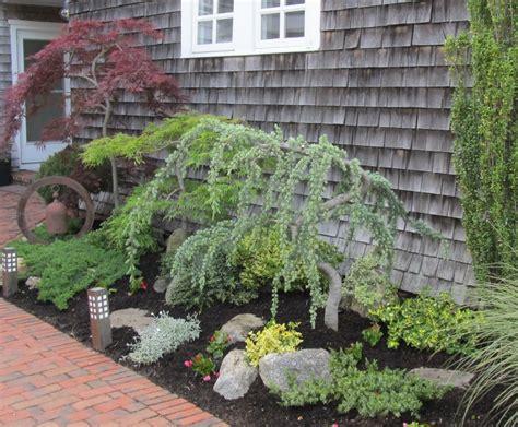 trees next ornamental trees plant is planting