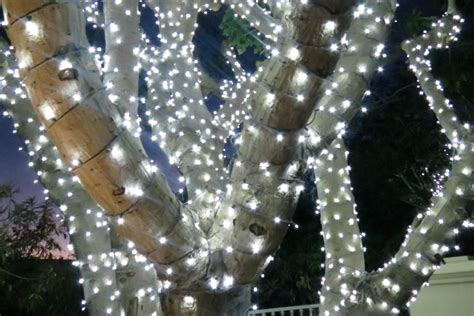 how to string lights on outdoor trees how to string lights in outdoor trees how to string