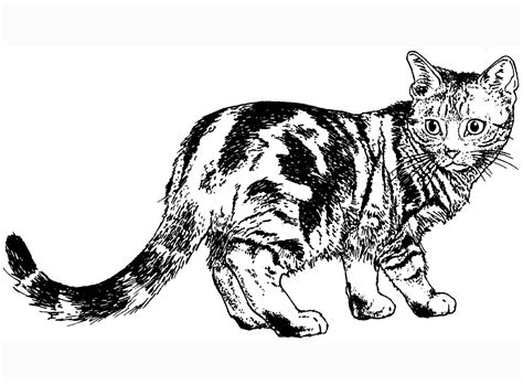 cat for adults cat coloring pages cat warrior cats cat