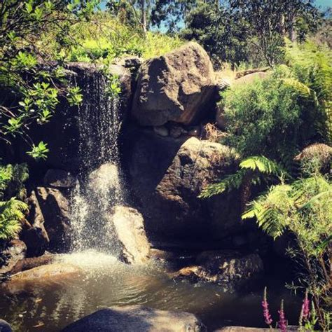 australian national botanic gardens canberra the waterfall at the rock garden picture of australian