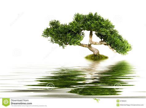 tree water tree reflecting in water stock photos image 8786623