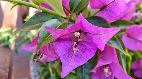 beautiful flowers names and pictures purple flower names and pictures beautiful flowers
