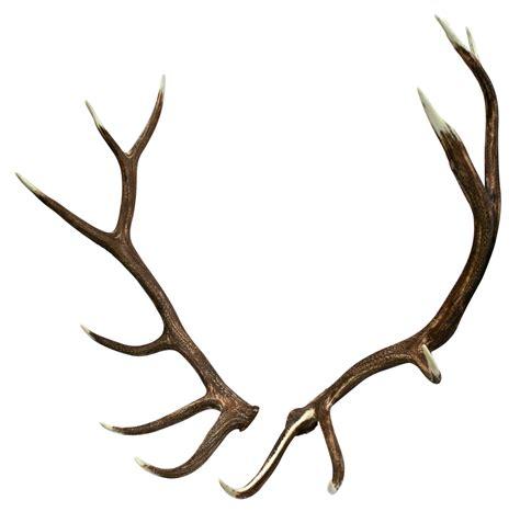 deer antler antler images