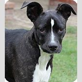 Lucy   Adopted ...