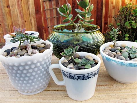 plants for the office 9 low maintenance plants for the office succulents in