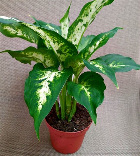 Plants Low Light low light indoor plants my 20 favorite house plants