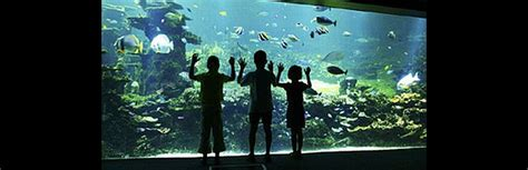 nausicaa aquarium boulogne sur mer le whitley cottage gite 224 condette sur la c 244 te d opale