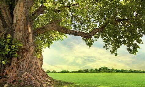tree pic five trees that need a friend arbor day