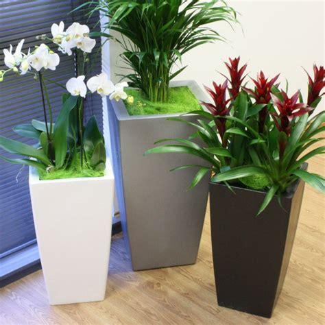 maceteros modernos de interior maceteros decorativos para el interior