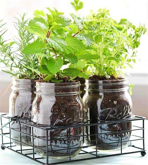 herb garden indoor indoor herb garden ideas homesteading indoor gardening tips