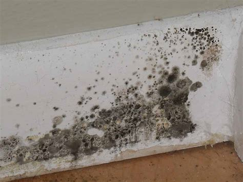 Get Rid Of Moisture In Basement by Moulds And How To Get Rid Of Them Matt S Blog For It