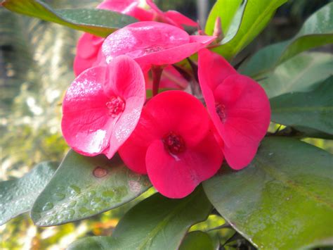 beautiful flowers names and pictures list of flower names and pictures beautiful flowers