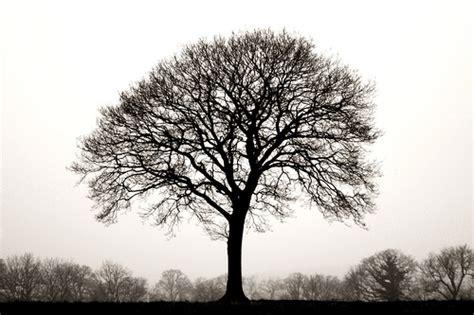 tree in white ten thousand trees black and white lone tree