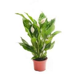 house for plants house plants ebay