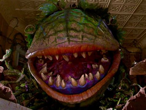 shop of horrors shop of horrors returning to select theaters this