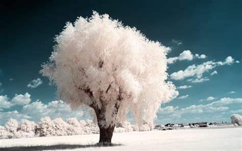 tree on white white trees part iv by myinqi on deviantart
