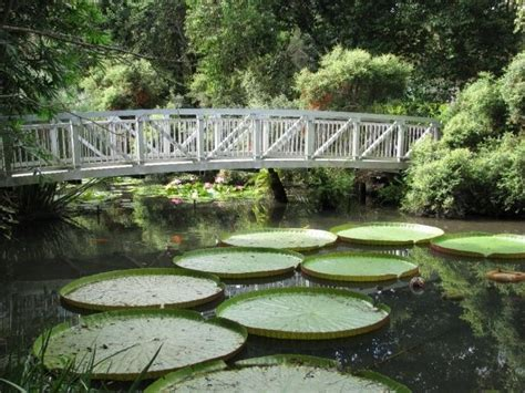 Botanical Gardens Gainesville by 17 Best Images About Gardens Beautiful Gardens All