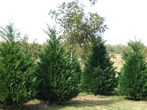 popular types of trees interior office plants part 3