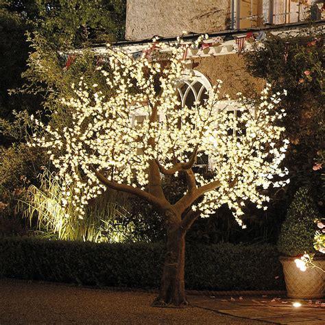 illuminated outdoor trees illuminated decorative led tree by enchanted trees