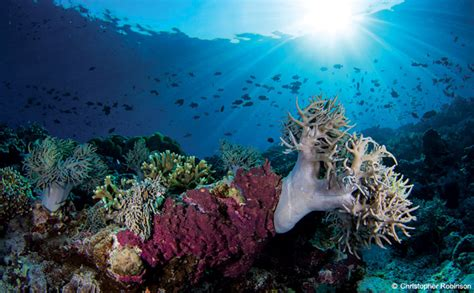 acrylic painting underwater the underwater landscape outdoor photographer