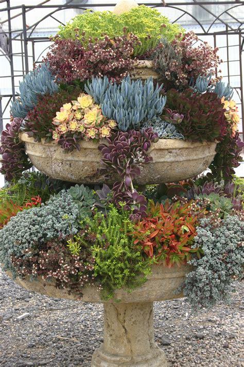 succulent garden ideas succulent container garden ideas car interior design