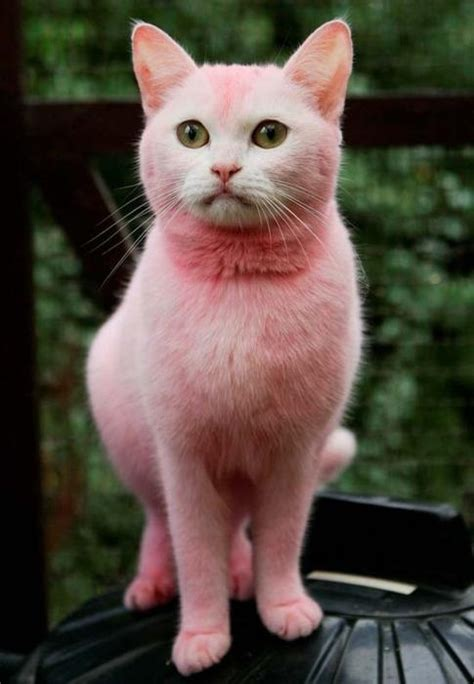 pink cat pink kool aid cat creatures just cats