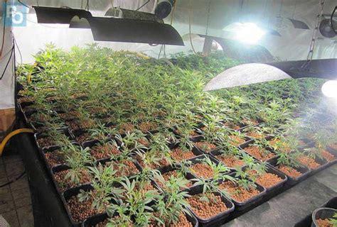 loire atlantique 4500 pieds de cannabis saisis 224 malville presse oc 233 an