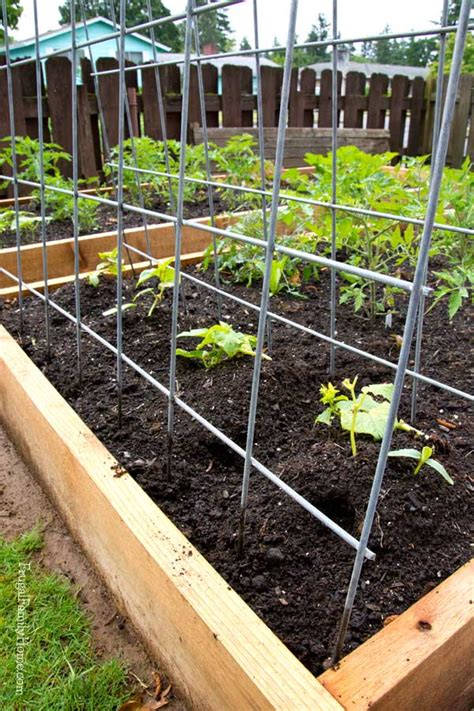 garden trellis plans diy garden trellis plans healthier gardens