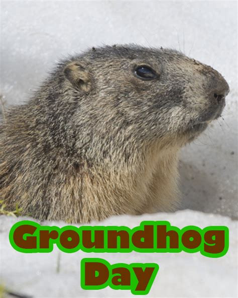 groundhog day play groundhog day primarygames play free