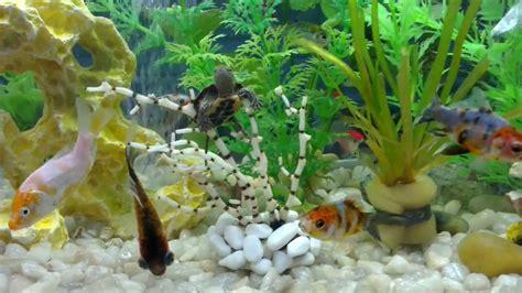 aquarium tortue d eau douce