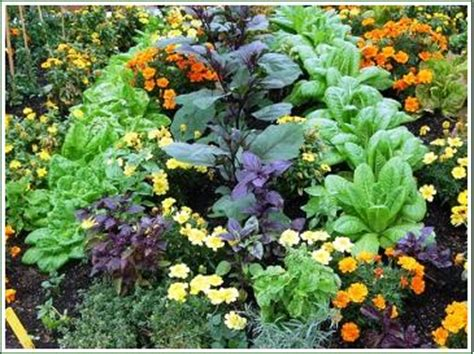 flowers to plant in vegetable garden companion planting vegetable gardening plant companions