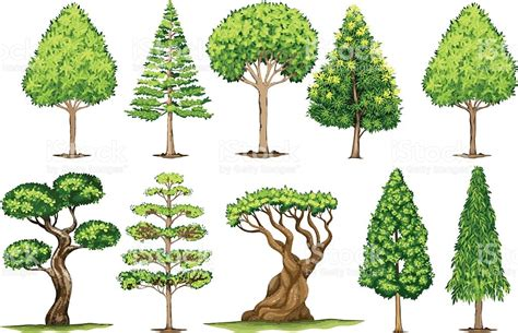 type of trees different types of trees stock vector 635949946 istock