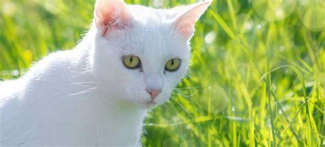chat d int 233 rieur ou chat d ext 233 rieur catsan