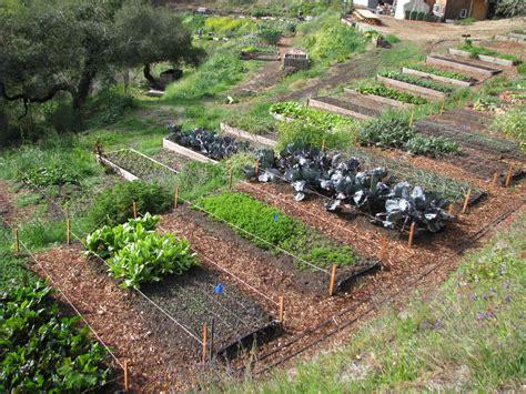 home vegetable garden tips remarkable design home vegetable garden ideas gardening