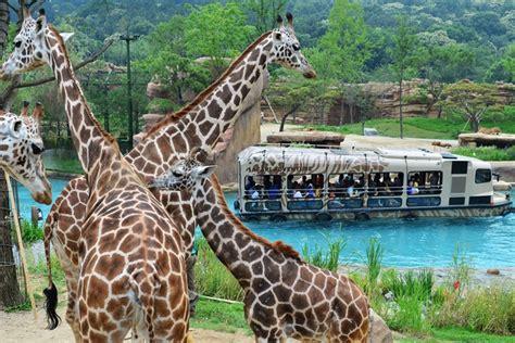 hotel everland everland 에버랜드 official korea tourism organization