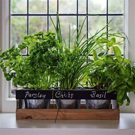 indoor herb planter indoor herb garden kit by viridescent wooden