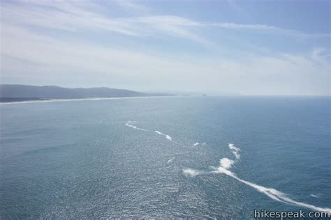 Cape Lookout Trail  Oregon Hikespeakcom