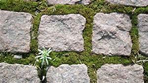 Was Hilft Gegen Fliegen Auf Der Terrasse : hausmittel gegen algen auf steinen schwimmbad und saunen ~ Markanthonyermac.com Haus und Dekorationen
