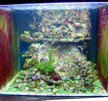 aquarium eau de mer recifal debuter conseils amenagement decor coraux poissons plantes