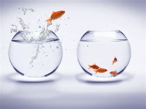 poisson dans un aquarium major