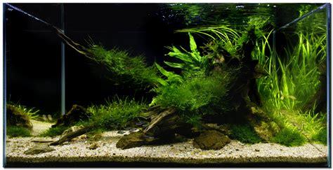 aquarium aquascape designs ideas aquascape aquarium designs dzuls interiors