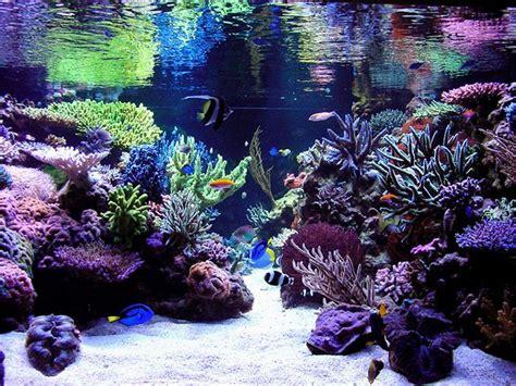 reef aquarium aquascape designs reef aquascaping designs search aquarium ideas