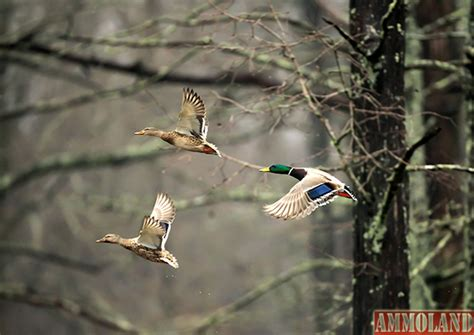 Duck Hunting Boat Death by Duck Hunting Tragedy In Arkansas Reminds Hunters To Stay